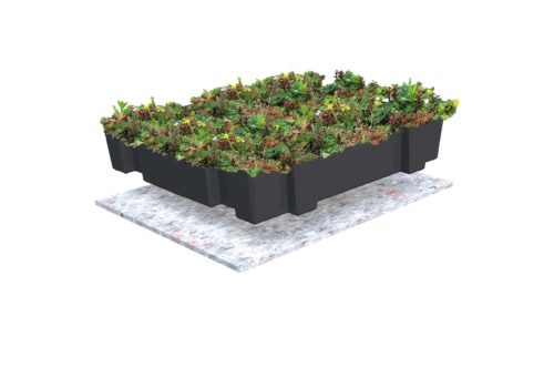Build-up Sempergreen Sedumtray
