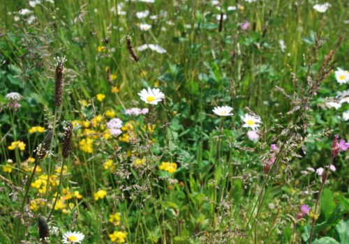 Wildflower blanket